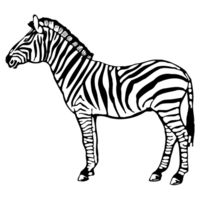 Zebra - Softstyle™ women's ringspun t-shirt Design